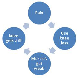 Arthritis in the knee often causes a vicous cycle to develop