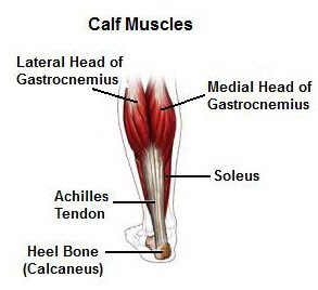 pulled calf muscle: causes, symptoms and treatment, Cephalic Vein
