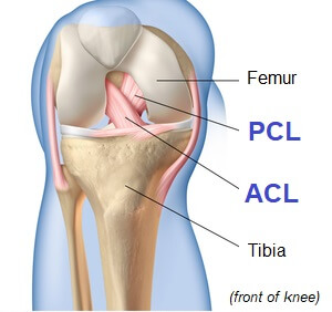 Cruciate Ligaments of the knee - find out what they are and how they work