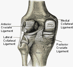 Some of the most common knee injuries involve overstretching of one of the 4 knee ligaments.
