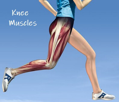 Knee Muscles: Find out everything you need to know about the muscles that control the knee, how to keep them in good shape and how they can go wrong.