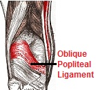 The oblique popliteal ligament - an extension of the semimembranosus hamstring muscle behind the knee