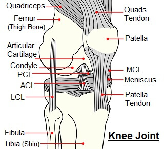 Problems in any of the structures of the knee can cause knee pain when bending