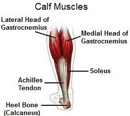 Calf Muscle Pain may be caused by damage to the calf region or surrounding tissues