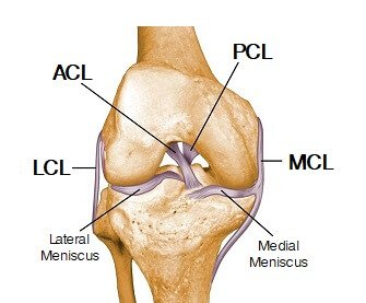 Knee joint anatomy diagram focusing on the knee ligaments