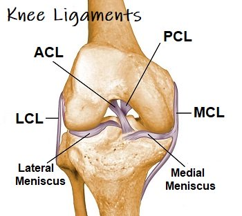 Diagram Of Knee Ligaments | Knee Ligaments Cruciates Collaterals Knee Pain Explained