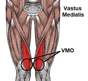 Vastus Medialis is one of the quads muscle found on the front, inner area of the thigh